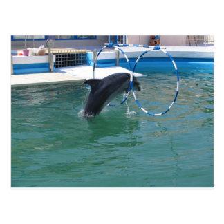Dolphin Hoop Postcard