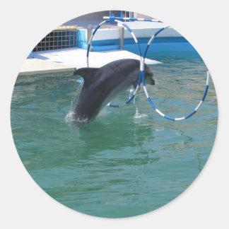 Dolphin Hoop Round Sticker