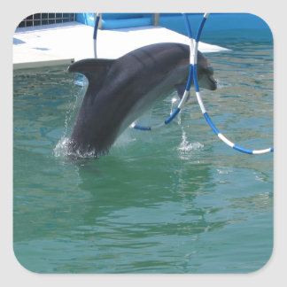 Dolphin Hoop Square Sticker