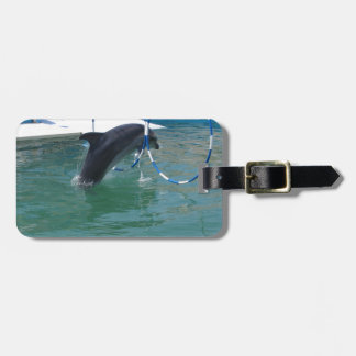 Dolphin Hoop Tags For Luggage