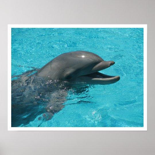 Dolphin I Poster