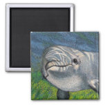 DOLPHIN IN COLOR PENCIL MAGNETS