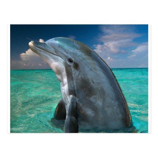 'Dolphin In The Bahamas Postcard