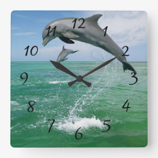 Dolphin in the wild jumping and playing clocks