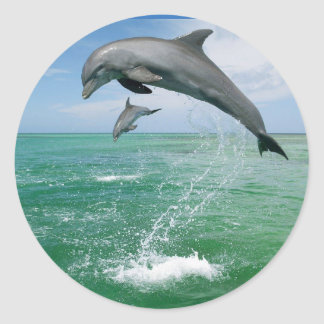 Dolphin in the wild jumping and playing round sticker