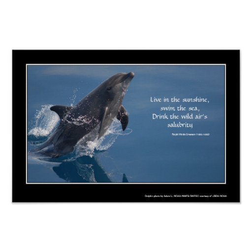 Dolphin inspirational poster