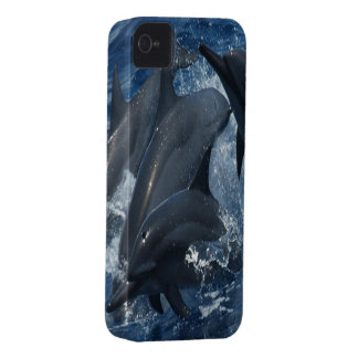 Dolphin iPhone 4 cover