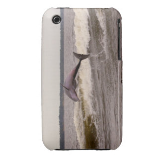 Dolphin IPod Case/Cover iPhone 3 Covers