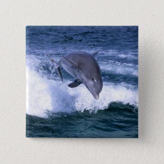 Dolphin jumping, Grand Bahama, Bahamas 15 Cm Square Badge