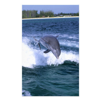 Dolphin jumping, Grand Bahama, Bahamas Photo Print