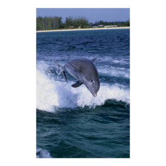 Dolphin jumping, Grand Bahama, Bahamas Posters