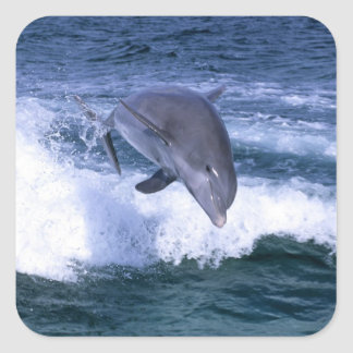 Dolphin jumping, Grand Bahama, Bahamas Square Sticker