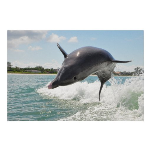 Dolphin Jumping Out of the Water Poster