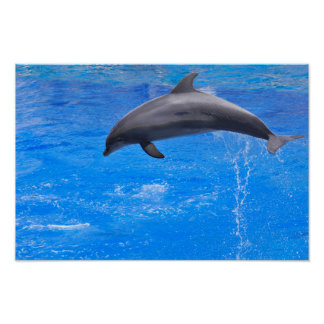 Dolphin jumping out of water poster
