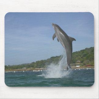 Dolphin jumping, Roatan, Bay Islands, Honduras Mouse Mat
