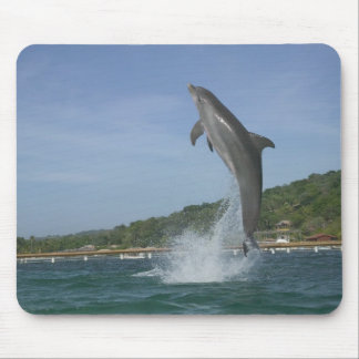 Dolphin jumping, Roatan, Bay Islands, Honduras Mouse Pad