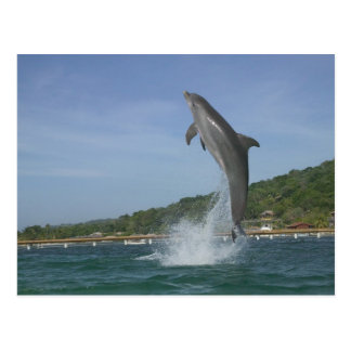 Dolphin jumping, Roatan, Bay Islands, Honduras Postcard