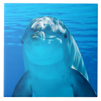 Dolphin Large Square Tile