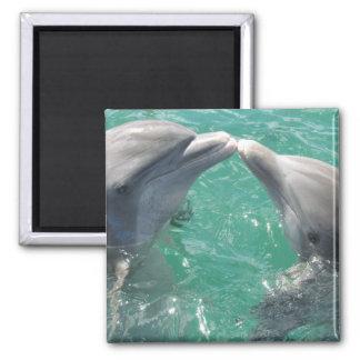 Dolphin Marine Animal Swim Dive Destiny Destiny's Magnet