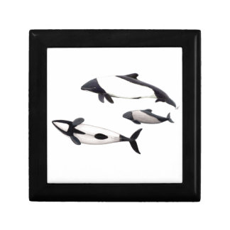Dolphin of Commerson Gift Box