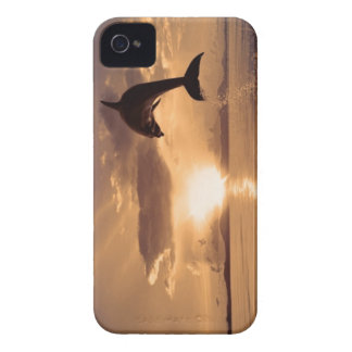 Dolphin on the Horizon iPhone 4 Covers