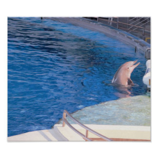 Dolphin Photo Poster