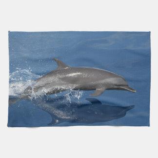 Dolphin Photo Tea Towel