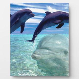 Dolphin Plaque
