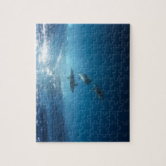 Dolphin pod swimming underwater jigsaw puzzle