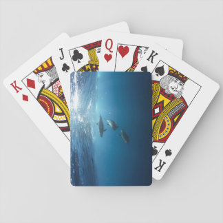 Dolphin pod swimming underwater playing cards