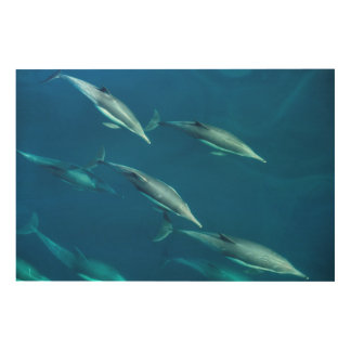 Dolphin Pod Swimming Wood Print