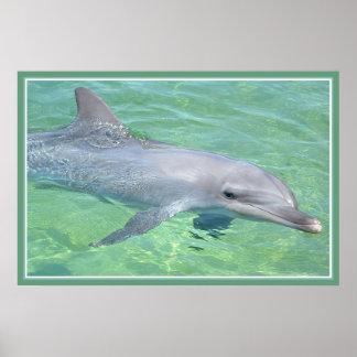dolphin print premium gloss
