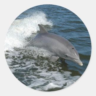 Dolphin Round Sticker