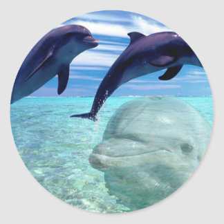 Dolphin Round Sticker