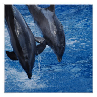 Dolphin Show Poster