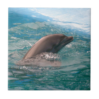 Dolphin Small Square Tile