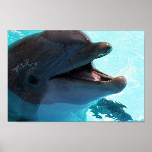 Dolphin Smiles Poster