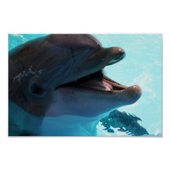 Dolphin Smiles Poster