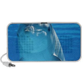 Dolphin Speaker System
