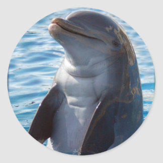 dolphin stand round stickers