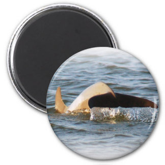 Dolphin Tail Magnet