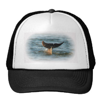 Dolphin Tail up Cap