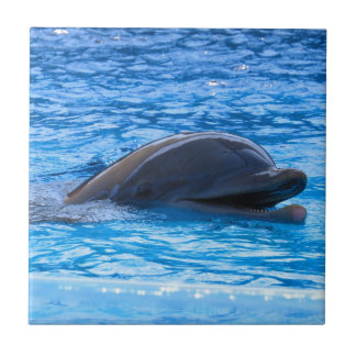 Dolphin Tile