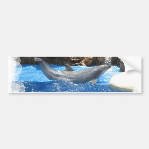 Dolphin Tricks Bumper Sticker
