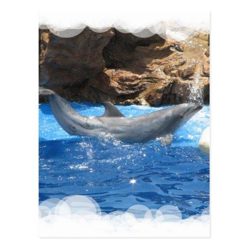 Dolphin Tricks Postcard