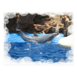 Dolphin Tricks Postcard