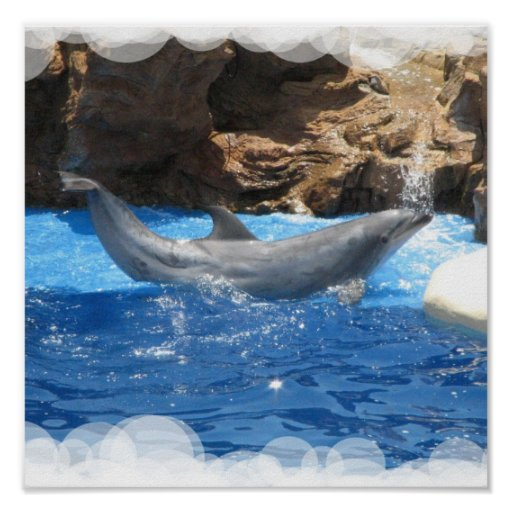 Dolphin Tricks Poster Print