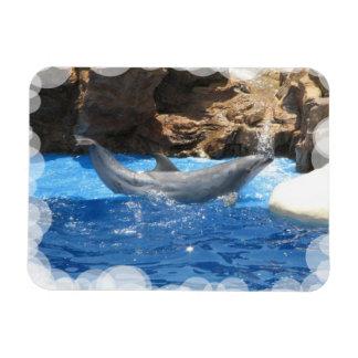 Dolphin Tricks  Premium Magnet Vinyl Magnet
