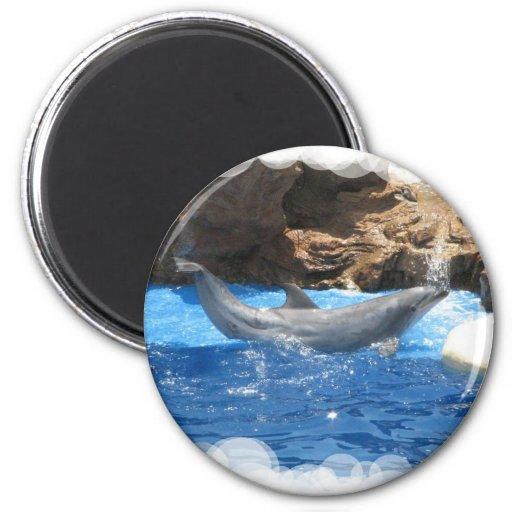 Dolphin Tricks Round Magnet Fridge Magnet