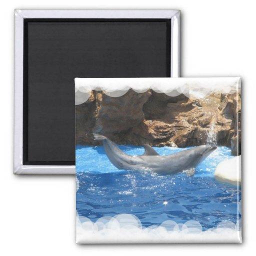 Dolphin Tricks Square Magnet Magnet